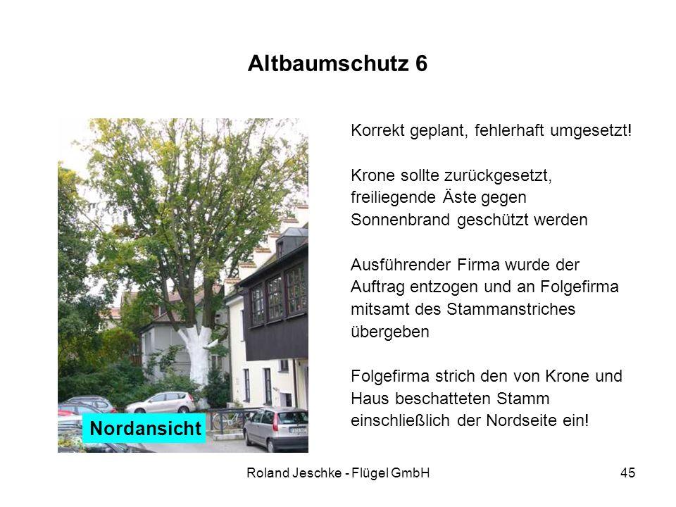 Roland Jeschke - Flügel GmbH45 Altbaumschutz 6 Korrekt geplant, fehlerhaft umgesetzt! Krone sollte zurückgesetzt, freiliegende Äste gegen Sonnenbrand