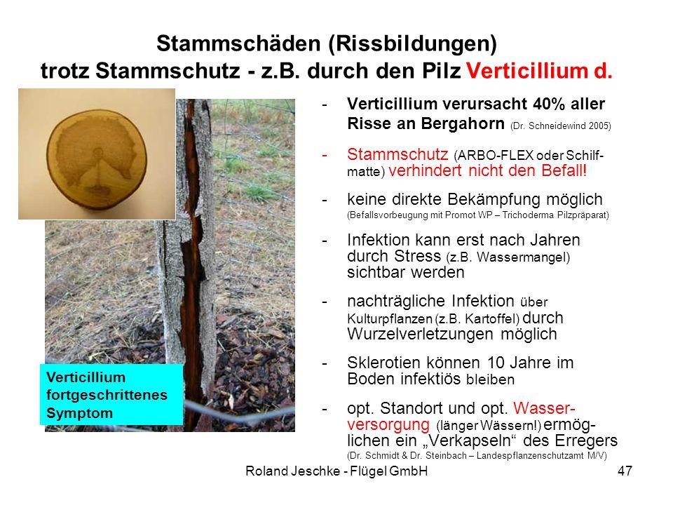 Roland Jeschke - Flügel GmbH47 Stammschäden (Rissbildungen) trotz Stammschutz - z.B. durch den Pilz Verticillium d. -Verticillium verursacht 40% aller