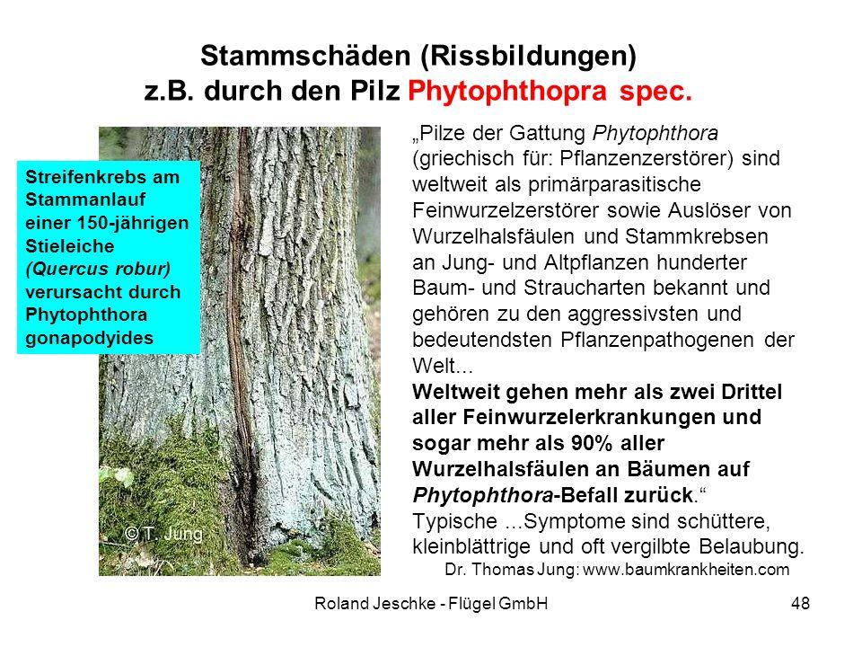 """Roland Jeschke - Flügel GmbH48 Stammschäden (Rissbildungen) z.B. durch den Pilz Phytophthopra spec. """"Pilze der Gattung Phytophthora (griechisch für: P"""