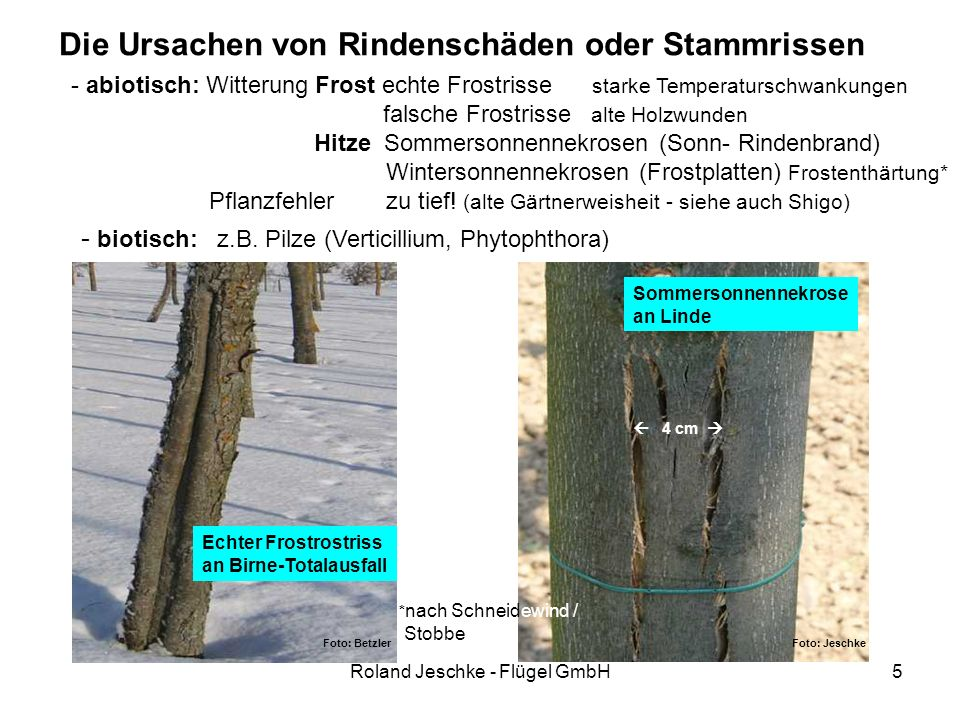 Roland Jeschke - Flügel GmbH36 Langzeit – Stammschutzfarbe häufige Baumängel -nasse oder gefrorene Stämme Optimal Temperaturen ab + 10°C, Minimaltemperatur in der Nacht nicht unter + 5°C (Versuch Dr.