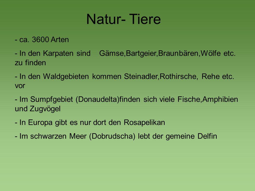 Natur- Tiere - ca. 3600 Arten - In den Karpaten sind Gämse,Bartgeier,Braunbären,Wölfe etc. zu finden - In den Waldgebieten kommen Steinadler,Rothirsch