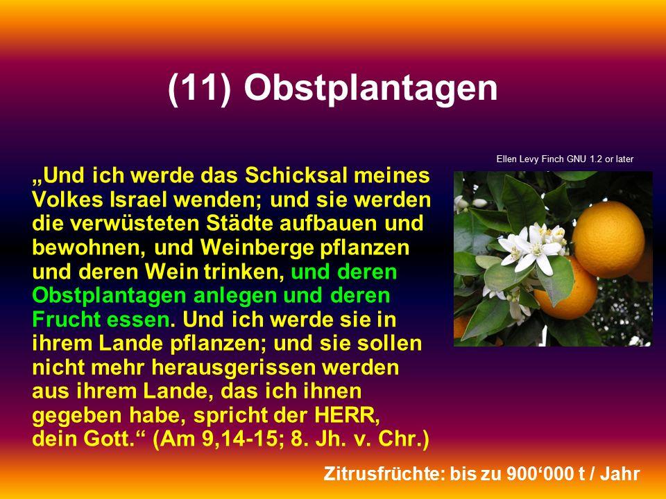 """(11) Obstplantagen """"Und ich werde das Schicksal meines Volkes Israel wenden; und sie werden die verwüsteten Städte aufbauen und bewohnen, und Weinberge pflanzen und deren Wein trinken, und deren Obstplantagen anlegen und deren Frucht essen."""