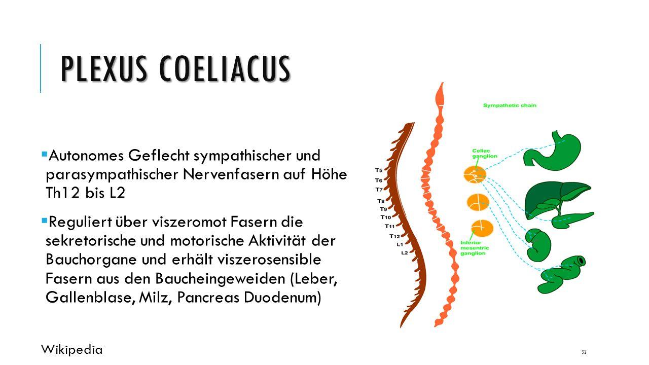 PLEXUS COELIACUS  Autonomes Geflecht sympathischer und parasympathischer Nervenfasern auf Höhe Th12 bis L2  Reguliert über viszeromot Fasern die sekretorische und motorische Aktivität der Bauchorgane und erhält viszerosensible Fasern aus den Baucheingeweiden (Leber, Gallenblase, Milz, Pancreas Duodenum) Wikipedia 32