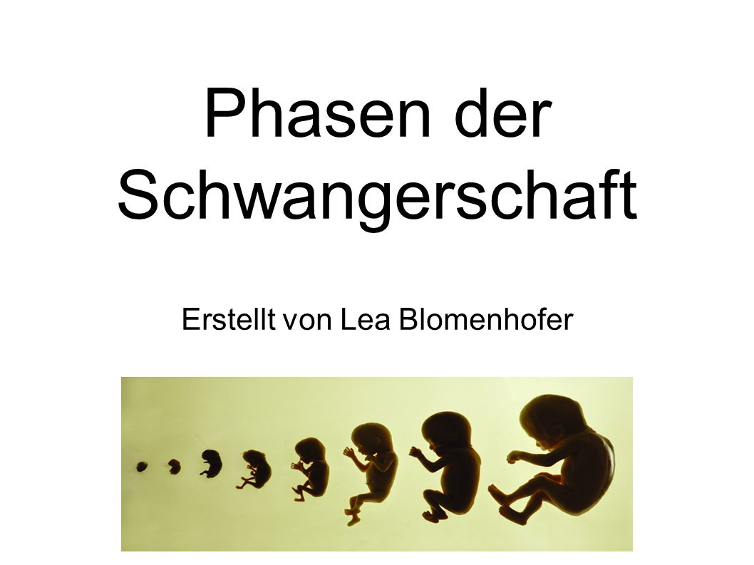 Phasen der Schwangerschaft Erstellt von Lea Blomenhofer