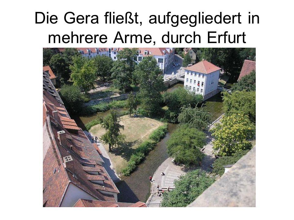 Die Gera fließt, aufgegliedert in mehrere Arme, durch Erfurt