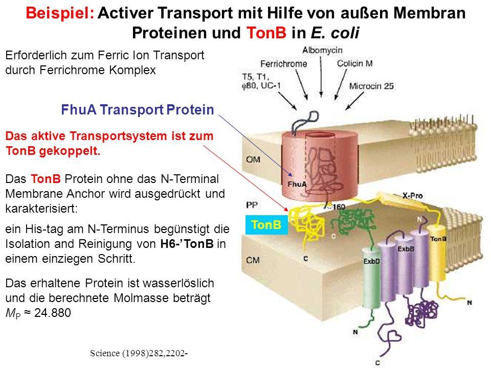 Beispiel: Activer Transport mit Hilfe von außen Membran Proteinen und TonB in E.