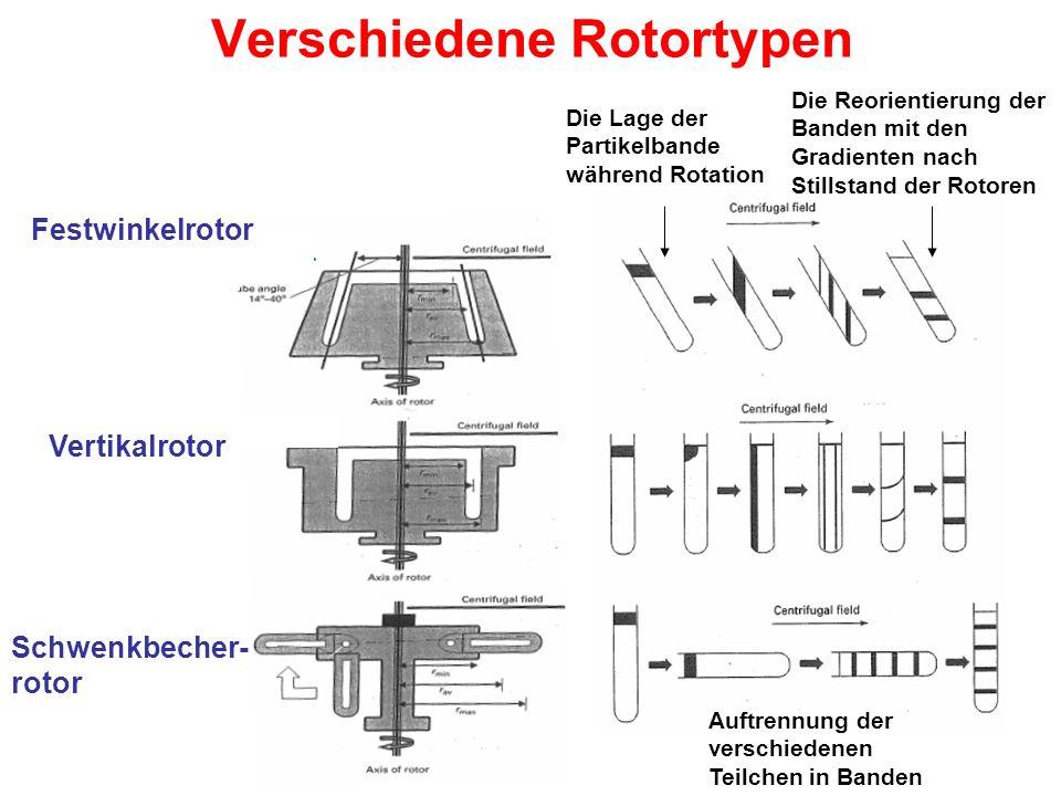 Verschiedene Rotortypen Schwenkbecher- rotor Vertikalrotor Festwinkelrotor Die Lage der Partikelbande während Rotation Die Reorientierung der Banden mit den Gradienten nach Stillstand der Rotoren Auftrennung der verschiedenen Teilchen in Banden
