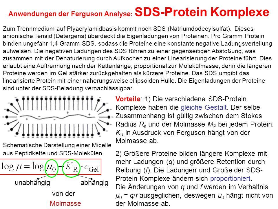 Anwendungen der Ferguson Analyse : SDS-Protein Komplexe Schematische Darstellung einer Micelle aus Peptidkette und SDS-Molekülen.