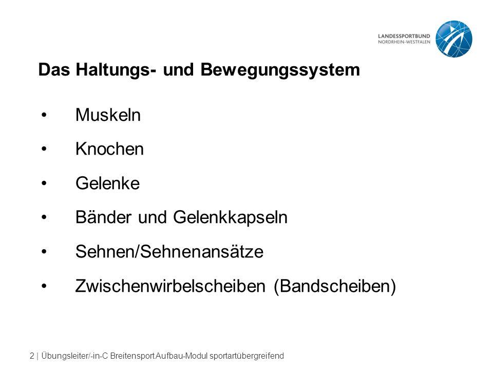 """13   Übungsleiter/-in-C Breitensport Aufbau-Modul sportartübergreifend """"Sehnen"""