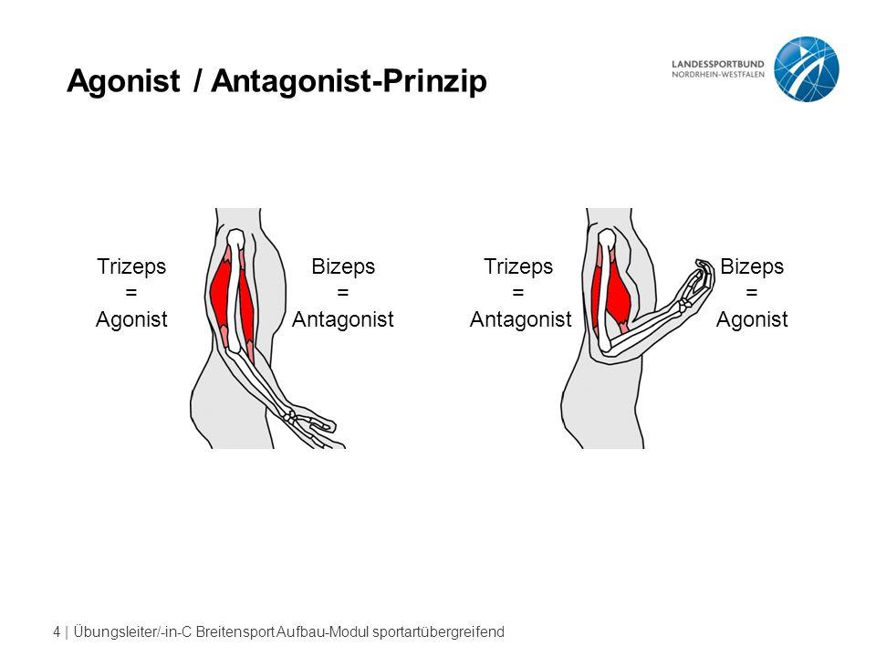 4 | Übungsleiter/-in-C Breitensport Aufbau-Modul sportartübergreifend Agonist / Antagonist-Prinzip Trizeps = Agonist Bizeps = Antagonist Trizeps = Antagonist Bizeps = Agonist
