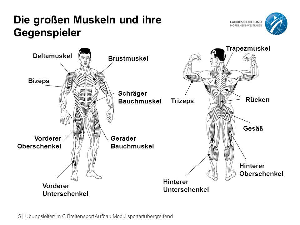 6   Übungsleiter/-in-C Breitensport Aufbau-Modul sportartübergreifend Unterstützung der Rücken- durch die Bauchmuskulatur
