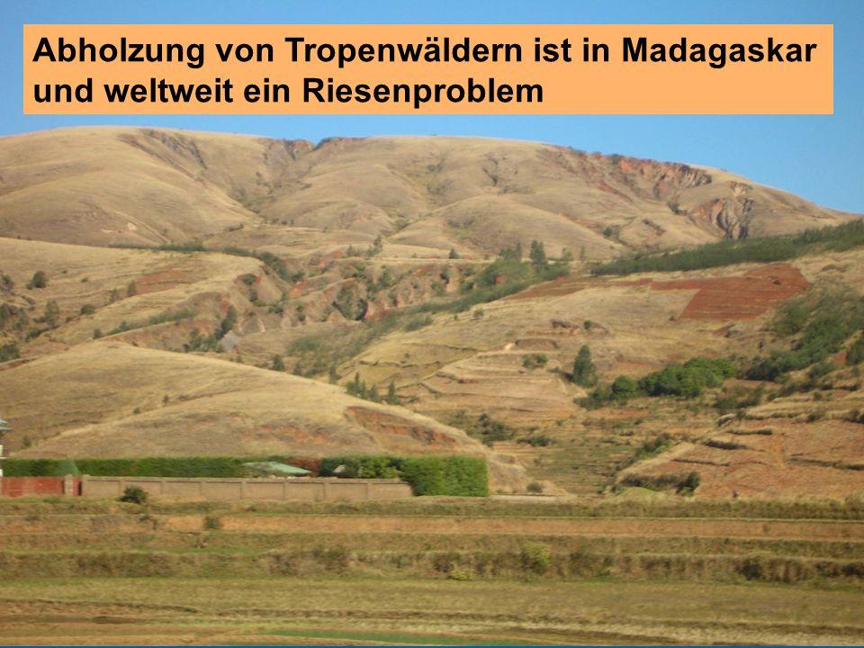 2014 Abholzung von Tropenwäldern ist in Madagaskar und weltweit ein Riesenproblem