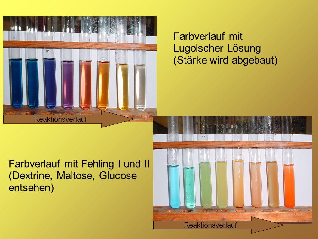 28 Farbverlauf mit Lugolscher Lösung (Stärke wird abgebaut) Farbverlauf mit Fehling I und II (Dextrine, Maltose, Glucose entsehen) Reaktionsverlauf
