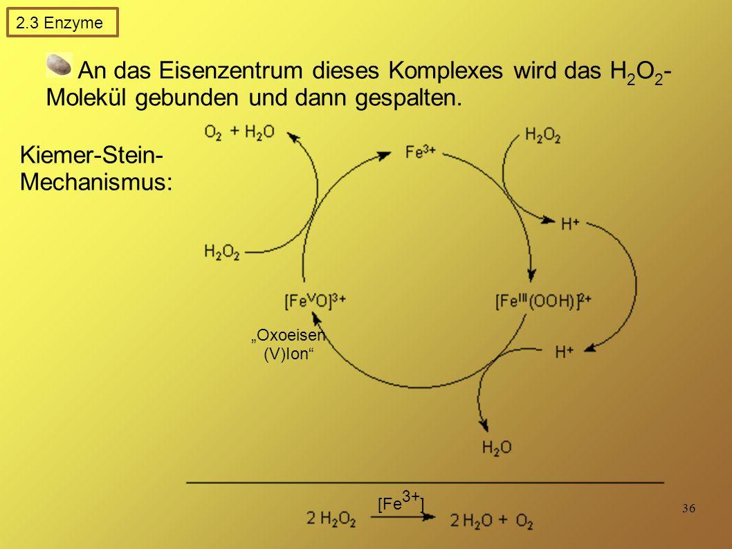 36 An das Eisenzentrum dieses Komplexes wird das H 2 O 2 - Molekül gebunden und dann gespalten.