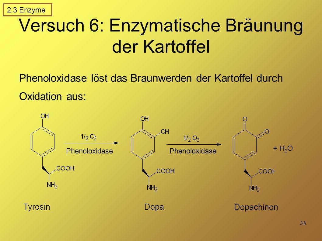38 Versuch 6: Enzymatische Bräunung der Kartoffel Phenoloxidase löst das Braunwerden der Kartoffel durch Oxidation aus: Tyrosin Dopa Dopachinon + H 2 O Phenoloxidase 2.3 Enzyme