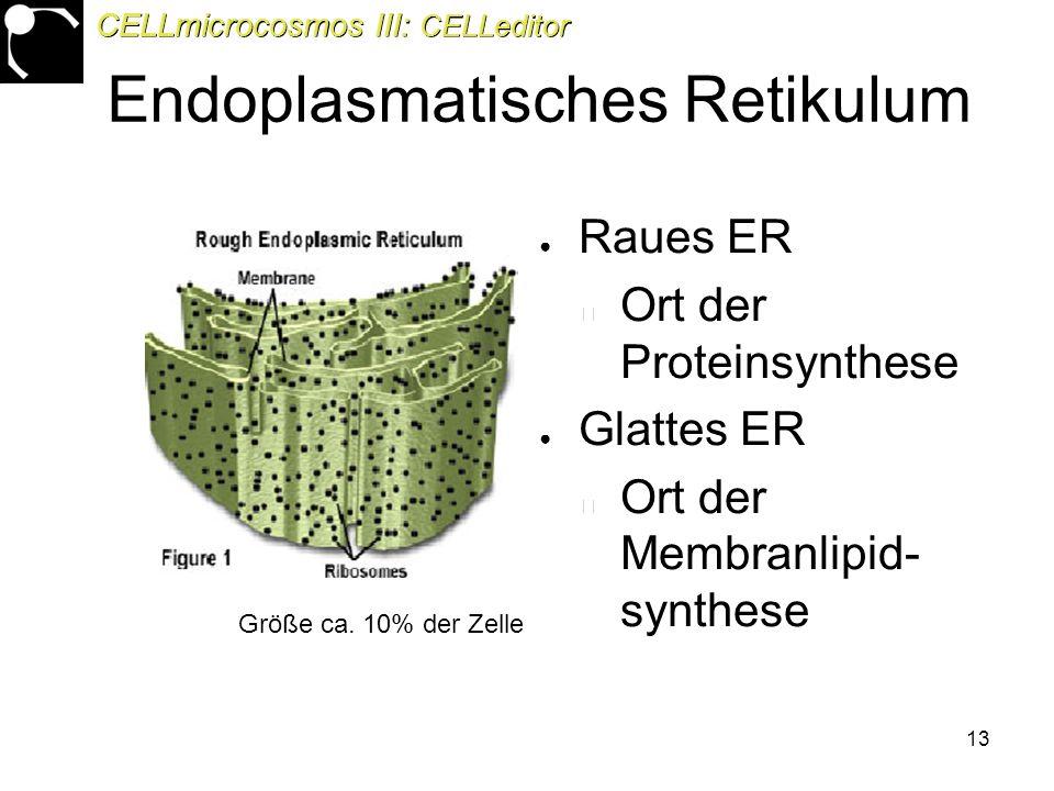 13 Endoplasmatisches Retikulum ● Raues ER Ort der Proteinsynthese ● Glattes ER Ort der Membranlipid- synthese Größe ca.