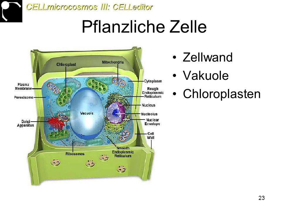 23 Pflanzliche Zelle Zellwand Vakuole Chloroplasten CELLmicrocosmos III: CELLeditor