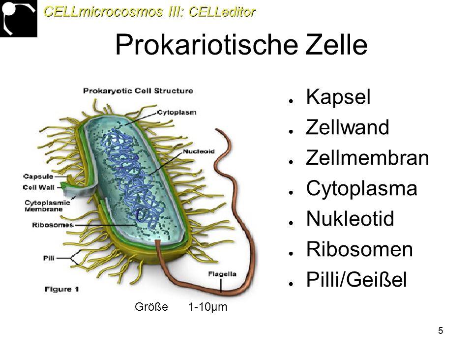 5 Prokariotische Zelle ● Kapsel ● Zellwand ● Zellmembran ● Cytoplasma ● Nukleotid ● Ribosomen ● Pilli/Geißel Größe 1-10μm CELLmicrocosmos III: CELLeditor