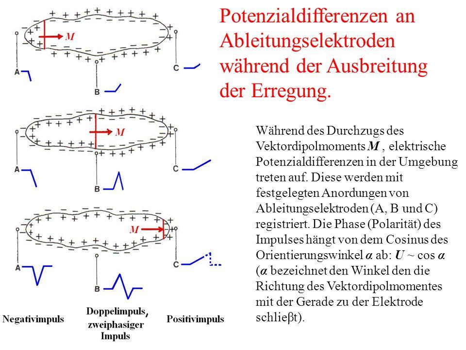 Während des Durchzugs des Vektordipolmoments M, elektrische Potenzialdifferenzen in der Umgebung treten auf.