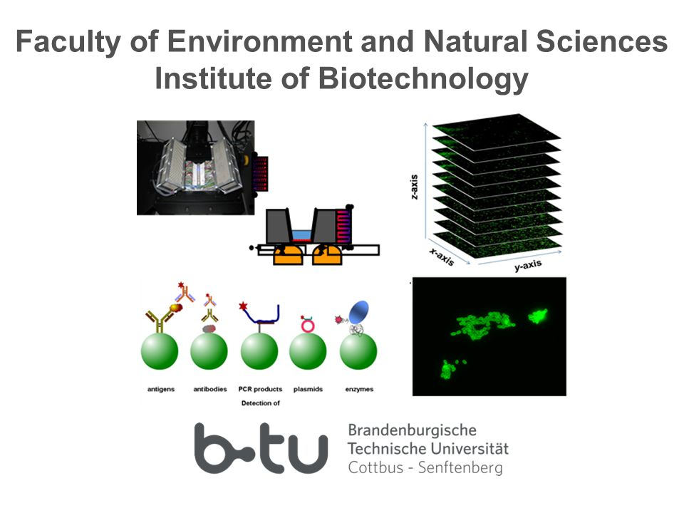 Faculty of Environment and Natural Sciences Institute of Biotechnology