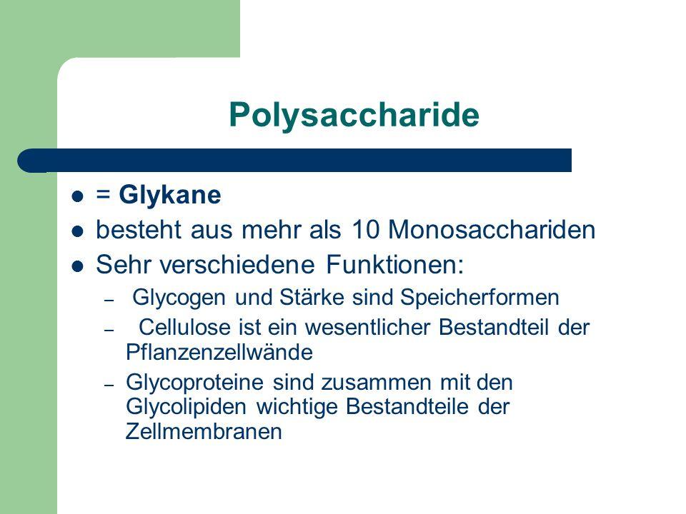 Polysaccharide = Glykane besteht aus mehr als 10 Monosacchariden Sehr verschiedene Funktionen: – Glycogen und Stärke sind Speicherformen – Cellulose ist ein wesentlicher Bestandteil der Pflanzenzellwände – Glycoproteine sind zusammen mit den Glycolipiden wichtige Bestandteile der Zellmembranen