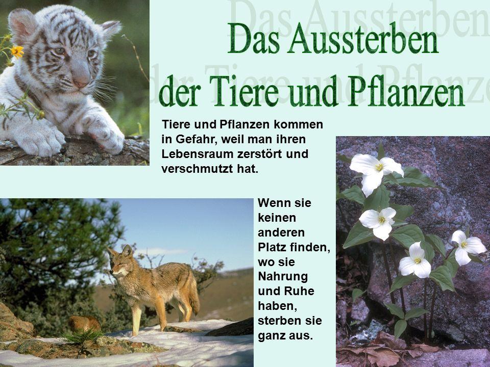Tiere und Pflanzen kommen in Gefahr, weil man ihren Lebensraum zerstört und verschmutzt hat.