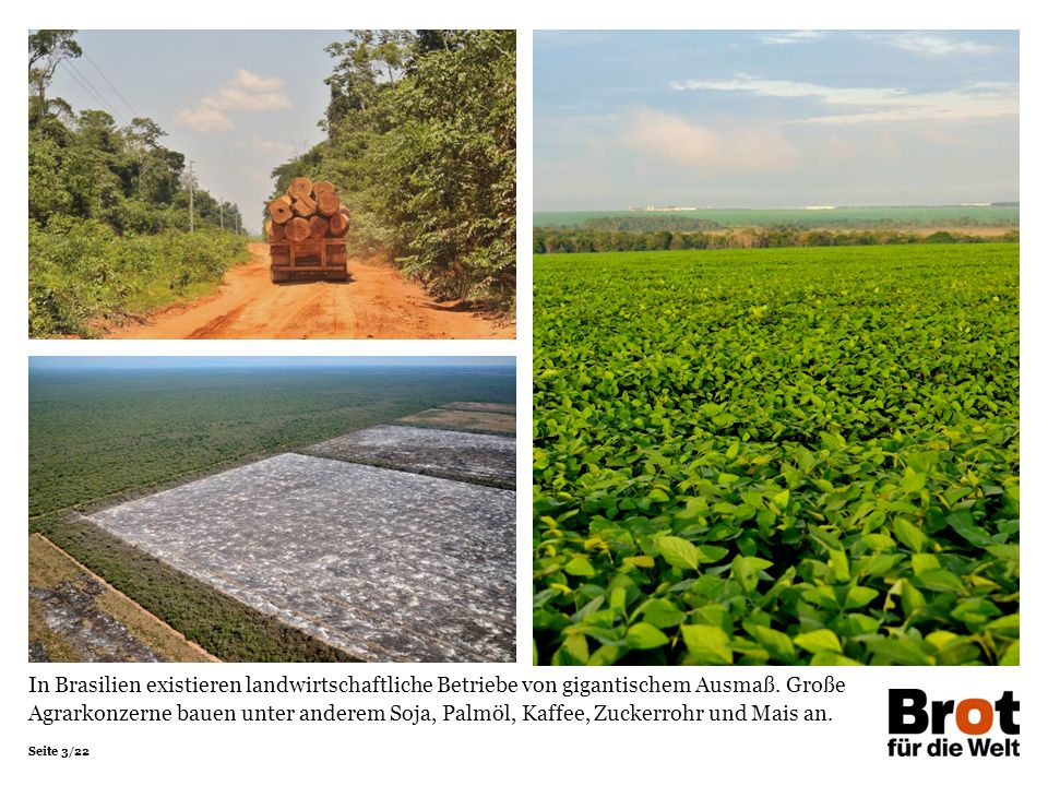 Seite 3/22 In Brasilien existieren landwirtschaftliche Betriebe von gigantischem Ausmaß. Große Agrarkonzerne bauen unter anderem Soja, Palmöl, Kaffee,