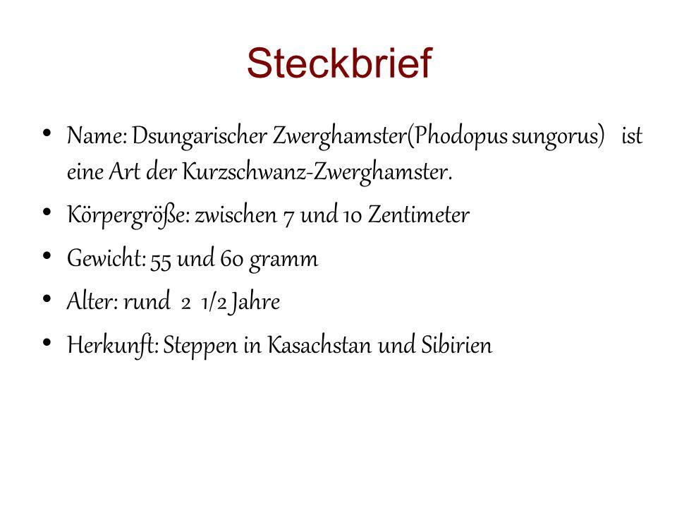 Steckbrief Name: Dsungarischer Zwerghamster(Phodopus sungorus) ist eine Art der Kurzschwanz-Zwerghamster.