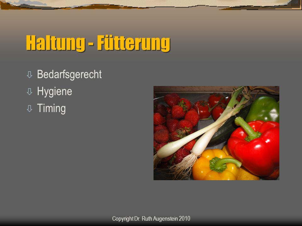 Haltung - Fütterung ò Bedarfsgerecht ò Hygiene ò Timing Copyright Dr. Ruth Augenstein 2010