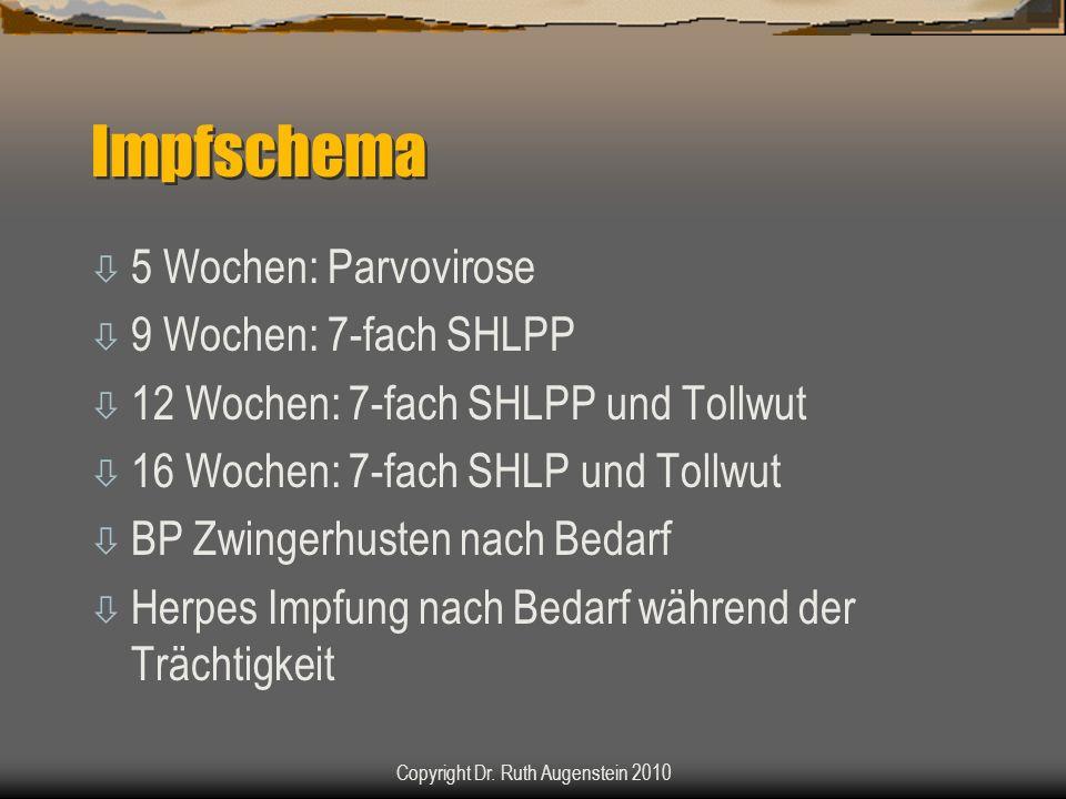 Impfschema ò 5 Wochen: Parvovirose ò 9 Wochen: 7-fach SHLPP ò 12 Wochen: 7-fach SHLPP und Tollwut ò 16 Wochen: 7-fach SHLP und Tollwut ò BP Zwingerhusten nach Bedarf ò Herpes Impfung nach Bedarf während der Trächtigkeit Copyright Dr.