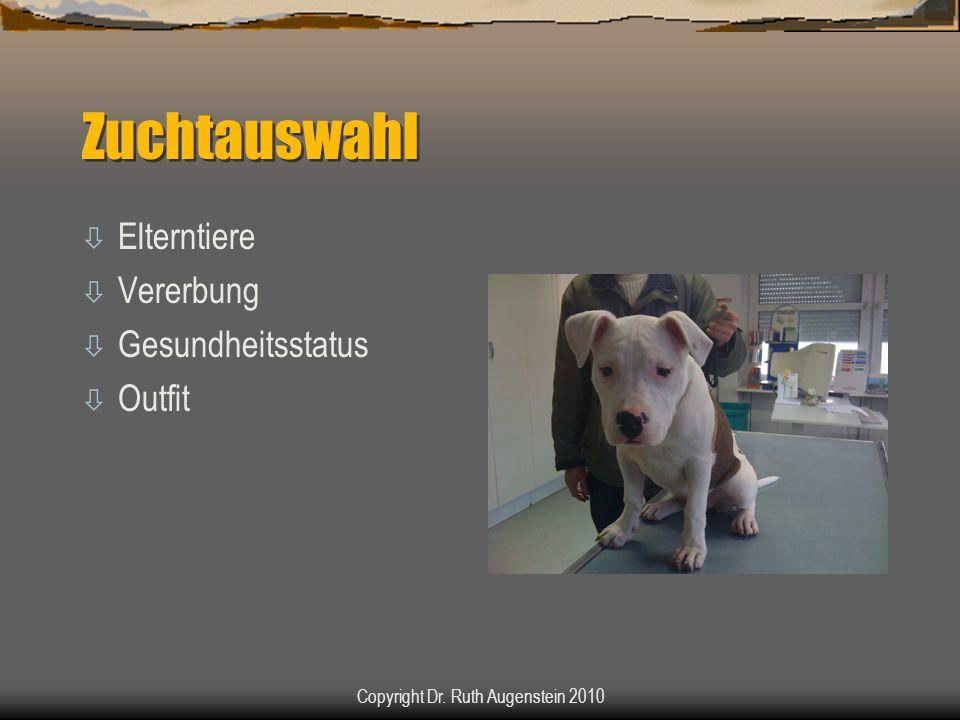 Zuchtauswahl ò Elterntiere ò Vererbung ò Gesundheitsstatus ò Outfit Copyright Dr. Ruth Augenstein 2010