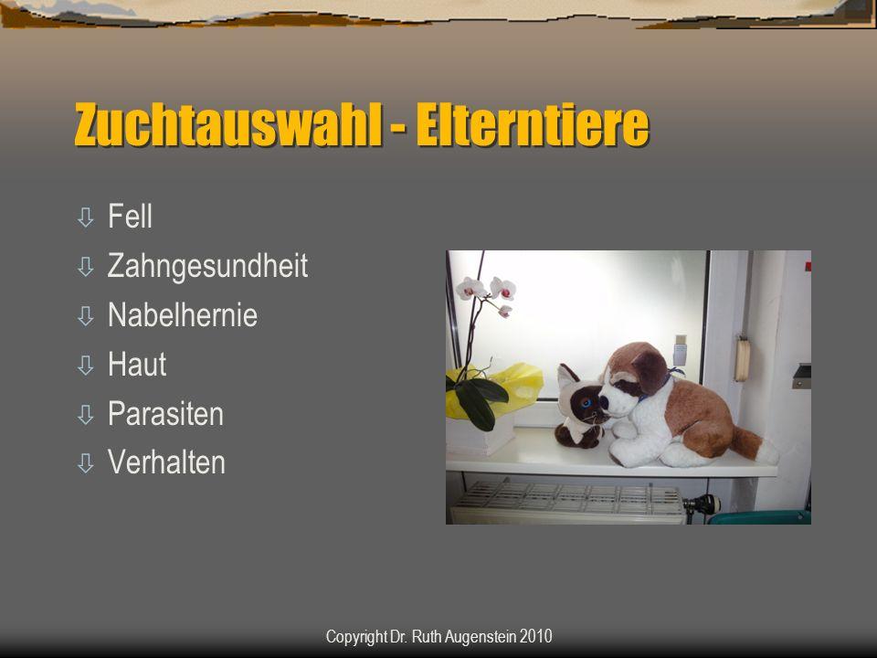 Zuchtauswahl - Elterntiere ò Fell ò Zahngesundheit ò Nabelhernie ò Haut ò Parasiten ò Verhalten Copyright Dr.