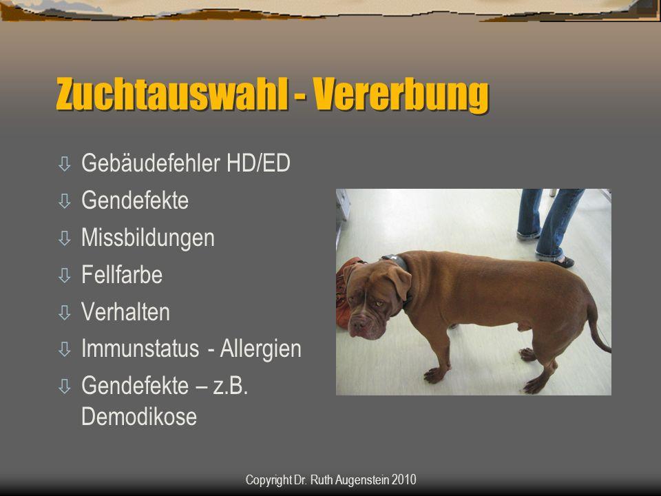 Zuchtauswahl - Vererbung ò Gebäudefehler HD/ED ò Gendefekte ò Missbildungen ò Fellfarbe ò Verhalten ò Immunstatus - Allergien ò Gendefekte – z.B. Demo