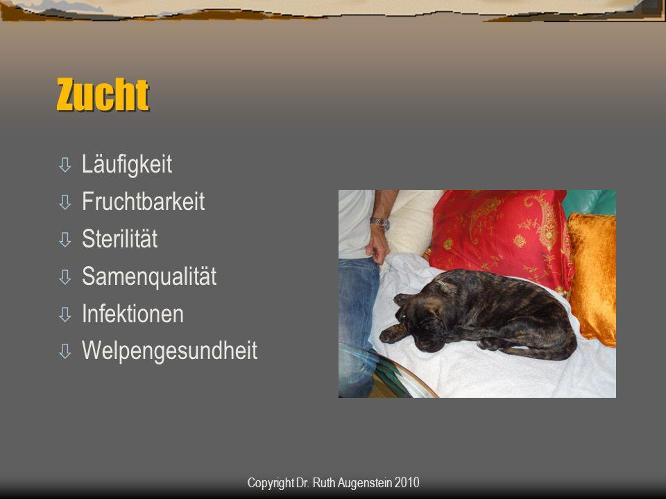 Zucht ò Läufigkeit ò Fruchtbarkeit ò Sterilität ò Samenqualität ò Infektionen ò Welpengesundheit Copyright Dr. Ruth Augenstein 2010