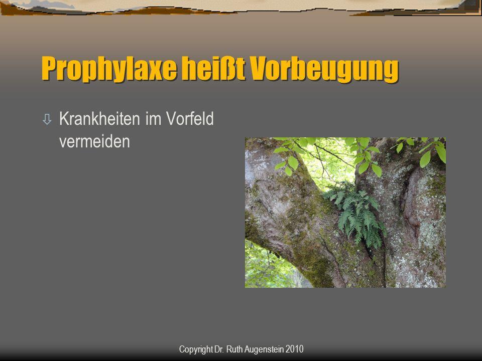 Parasiten - Einzeller ò Coccidien ò Giardien ò Neospora Copyright Dr. Ruth Augenstein 2010