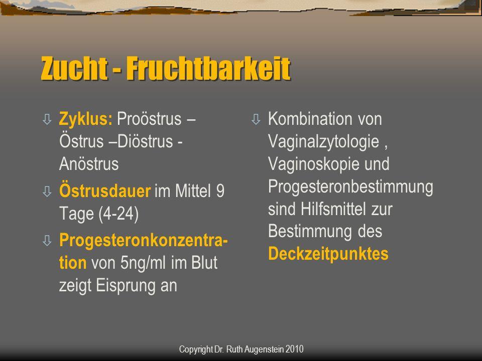 Zucht - Fruchtbarkeit ò Zyklus: Proöstrus – Östrus –Diöstrus - Anöstrus ò Östrusdauer im Mittel 9 Tage (4-24) ò Progesteronkonzentra- tion von 5ng/ml