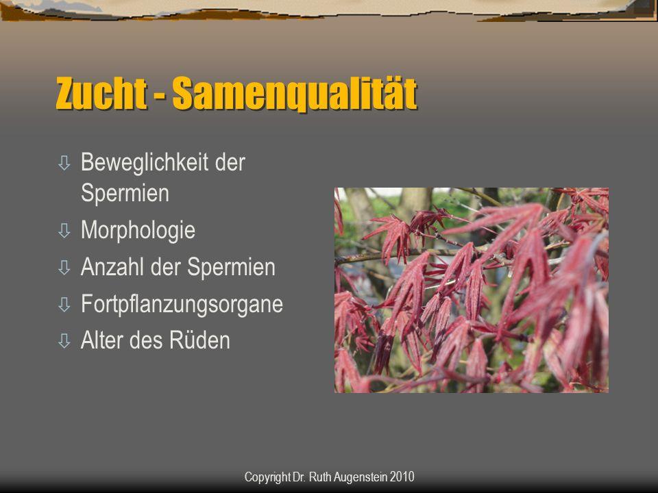 Zucht - Samenqualität ò Beweglichkeit der Spermien ò Morphologie ò Anzahl der Spermien ò Fortpflanzungsorgane ò Alter des Rüden Copyright Dr. Ruth Aug