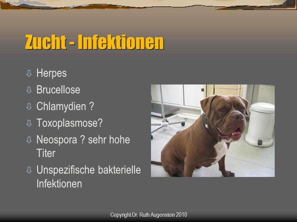 Zucht - Infektionen ò Herpes ò Brucellose ò Chlamydien .