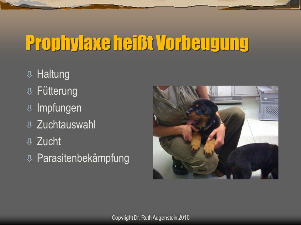 Prophylaxe heißt Vorbeugung ò Haltung ò Fütterung ò Impfungen ò Zuchtauswahl ò Zucht ò Parasitenbekämpfung Copyright Dr. Ruth Augenstein 2010