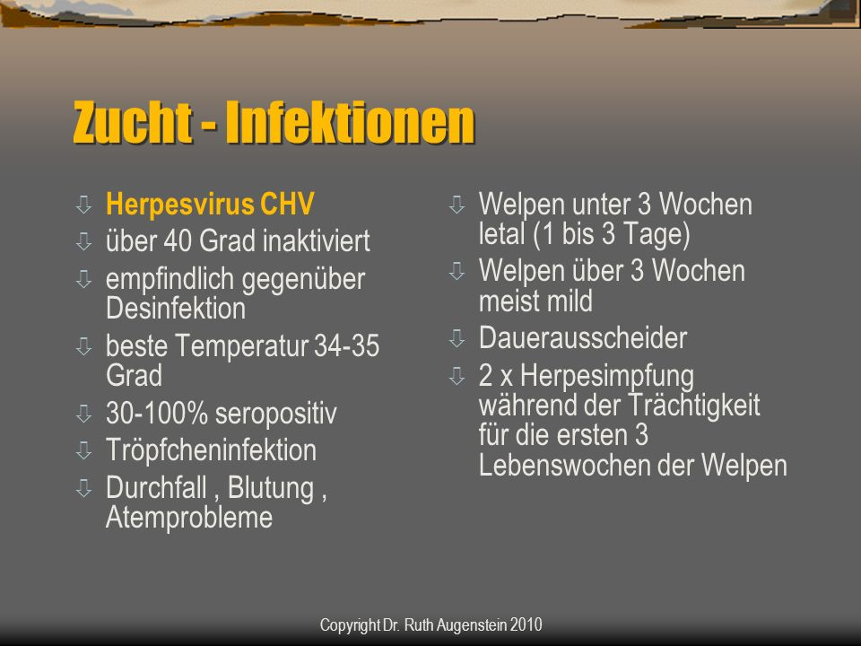 Zucht - Infektionen ò Herpesvirus CHV ò über 40 Grad inaktiviert ò empfindlich gegenüber Desinfektion ò beste Temperatur 34-35 Grad ò 30-100% seropositiv ò Tröpfcheninfektion ò Durchfall, Blutung, Atemprobleme ò Welpen unter 3 Wochen letal (1 bis 3 Tage) ò Welpen über 3 Wochen meist mild ò Dauerausscheider ò 2 x Herpesimpfung während der Trächtigkeit für die ersten 3 Lebenswochen der Welpen Copyright Dr.