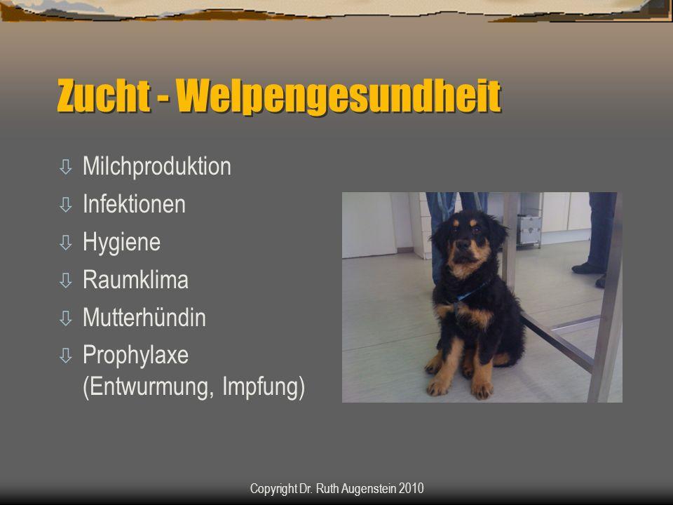 Zucht - Welpengesundheit ò Milchproduktion ò Infektionen ò Hygiene ò Raumklima ò Mutterhündin ò Prophylaxe (Entwurmung, Impfung) Copyright Dr. Ruth Au