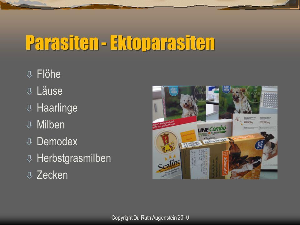 Parasiten - Ektoparasiten ò Flöhe ò Läuse ò Haarlinge ò Milben ò Demodex ò Herbstgrasmilben ò Zecken Copyright Dr. Ruth Augenstein 2010