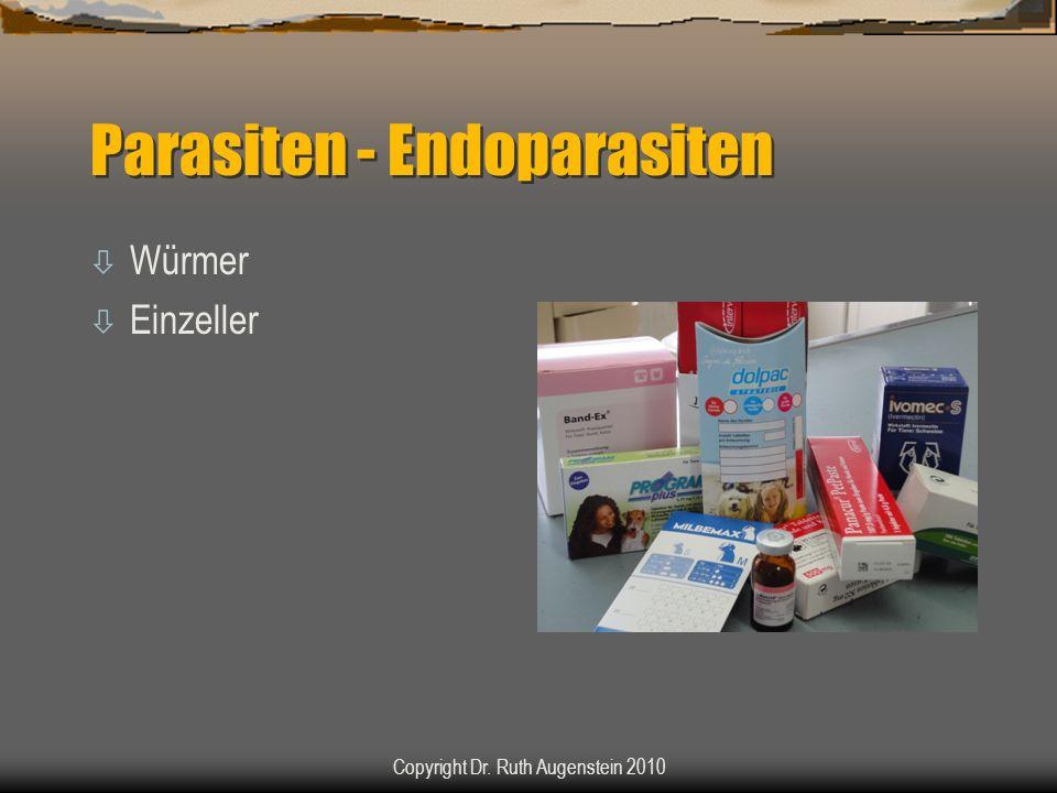 Parasiten - Endoparasiten ò Würmer ò Einzeller Copyright Dr. Ruth Augenstein 2010