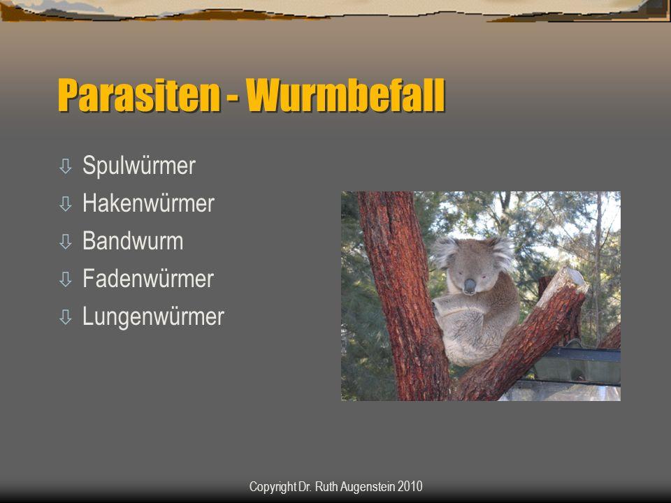Parasiten - Wurmbefall ò Spulwürmer ò Hakenwürmer ò Bandwurm ò Fadenwürmer ò Lungenwürmer Copyright Dr. Ruth Augenstein 2010