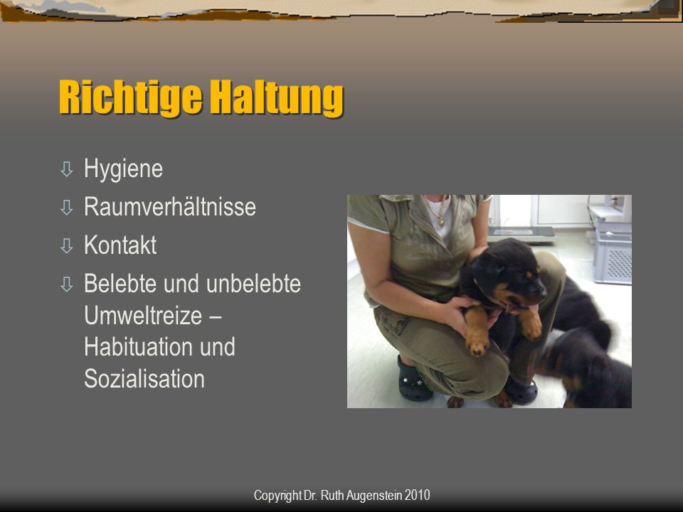 Richtige Haltung ò Hygiene ò Raumverhältnisse ò Kontakt ò Belebte und unbelebte Umweltreize – Habituation und Sozialisation Copyright Dr. Ruth Augenst