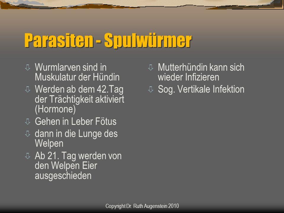 Parasiten - Spulwürmer ò Wurmlarven sind in Muskulatur der Hündin ò Werden ab dem 42.Tag der Trächtigkeit aktiviert (Hormone) ò Gehen in Leber Fötus ò dann in die Lunge des Welpen ò Ab 21.