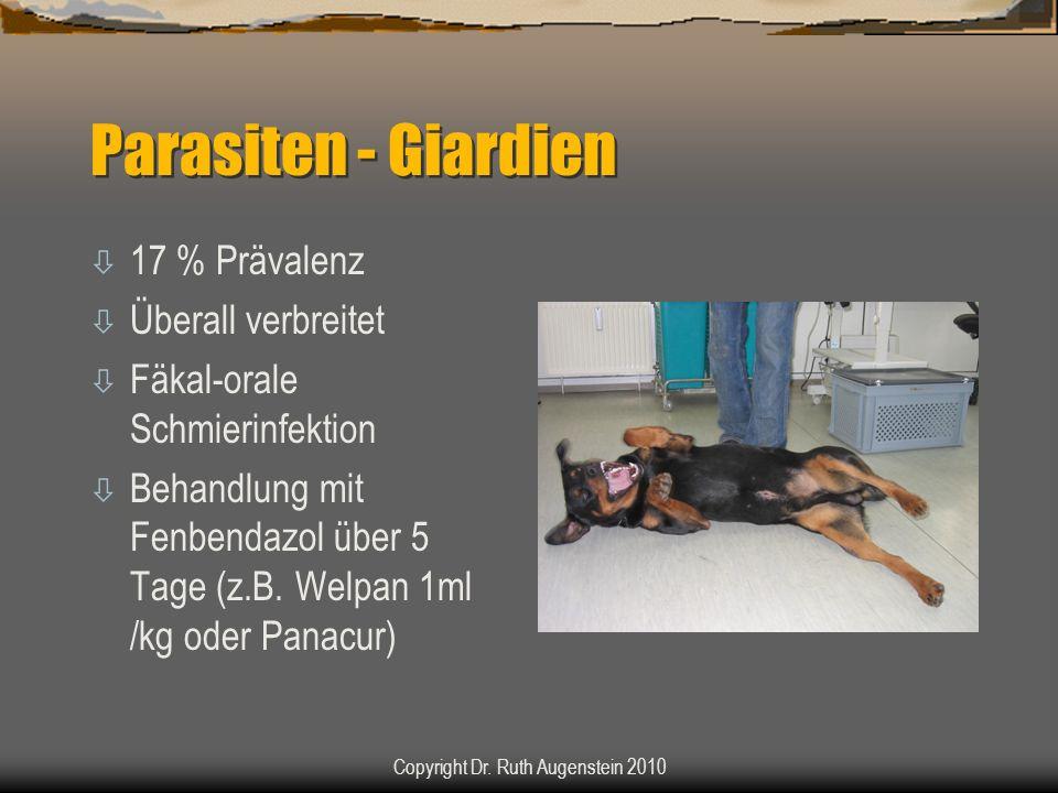 Parasiten - Giardien ò 17 % Prävalenz ò Überall verbreitet ò Fäkal-orale Schmierinfektion ò Behandlung mit Fenbendazol über 5 Tage (z.B. Welpan 1ml /k