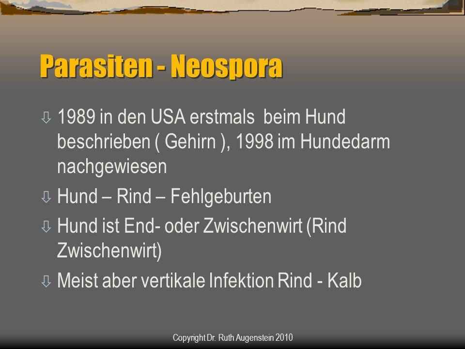Parasiten - Neospora ò 1989 in den USA erstmals beim Hund beschrieben ( Gehirn ), 1998 im Hundedarm nachgewiesen ò Hund – Rind – Fehlgeburten ò Hund ist End- oder Zwischenwirt (Rind Zwischenwirt) ò Meist aber vertikale Infektion Rind - Kalb Copyright Dr.