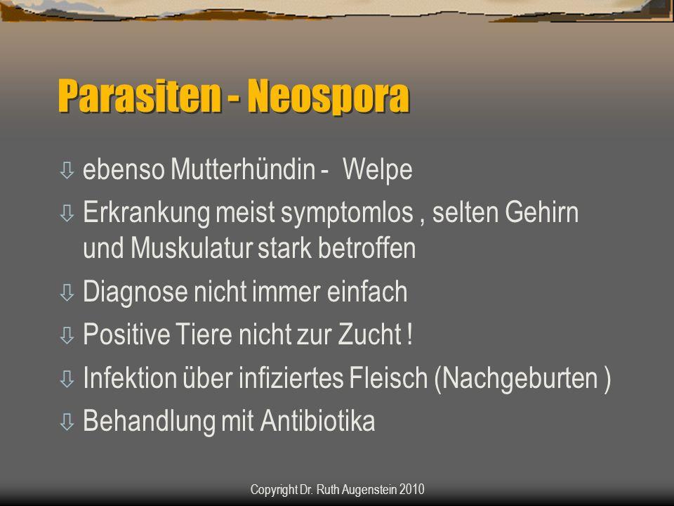 Parasiten - Neospora ò ebenso Mutterhündin - Welpe ò Erkrankung meist symptomlos, selten Gehirn und Muskulatur stark betroffen ò Diagnose nicht immer einfach ò Positive Tiere nicht zur Zucht .