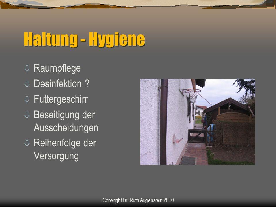 Haltung - Hygiene ò Raumpflege ò Desinfektion ? ò Futtergeschirr ò Beseitigung der Ausscheidungen ò Reihenfolge der Versorgung Copyright Dr. Ruth Auge
